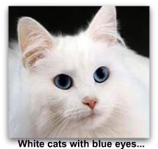 white_cat_with_blue_eyes
