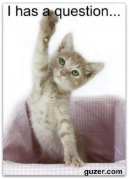 cat raising hand for question