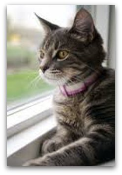 cat_looking_out_window