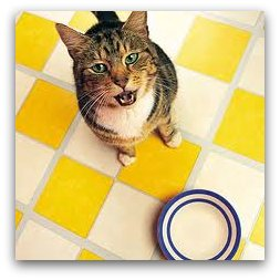 cat_by_bowl