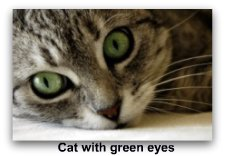 cat_with_green_eyes