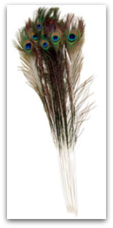 peacock-feather-bunch