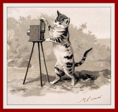 vintage_cat_with_moviecamera
