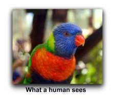 humans see in color