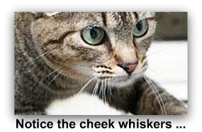 cat_whiskers_on_cheek