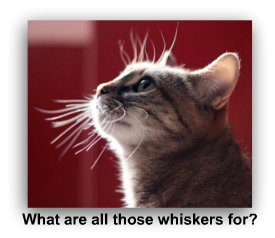 cat_whiskers_profile
