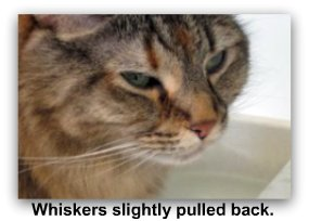 cat_whiskers_back