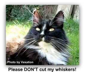 cat_whiskers_long